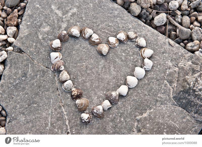 Ocean Heart elegant Design Glück Kunst Kunstwerk Umwelt Natur Sommer Seeufer Flussufer Strand Meer Tier Muschel Stein Zeichen Herz Liebe schön braun grau