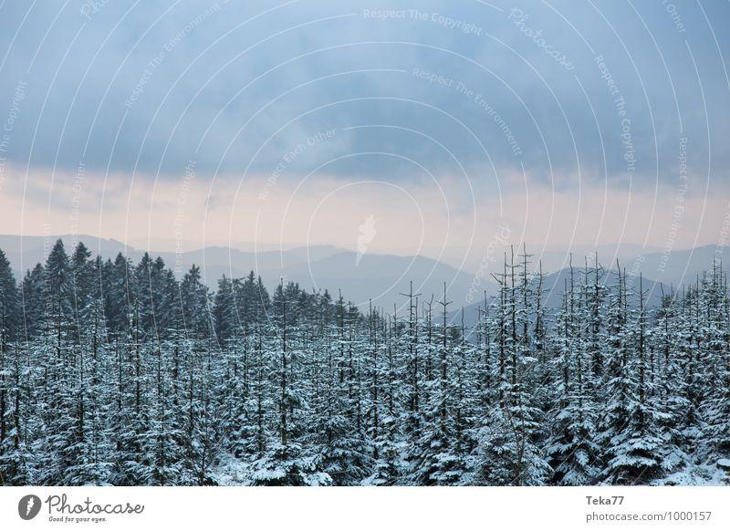 Wintertannen 2 Ferien & Urlaub & Reisen Umwelt Natur Eis Frost Schnee Schneefall Wald ästhetisch bizarr Kahler Asten Sauerland Farbfoto Außenaufnahme