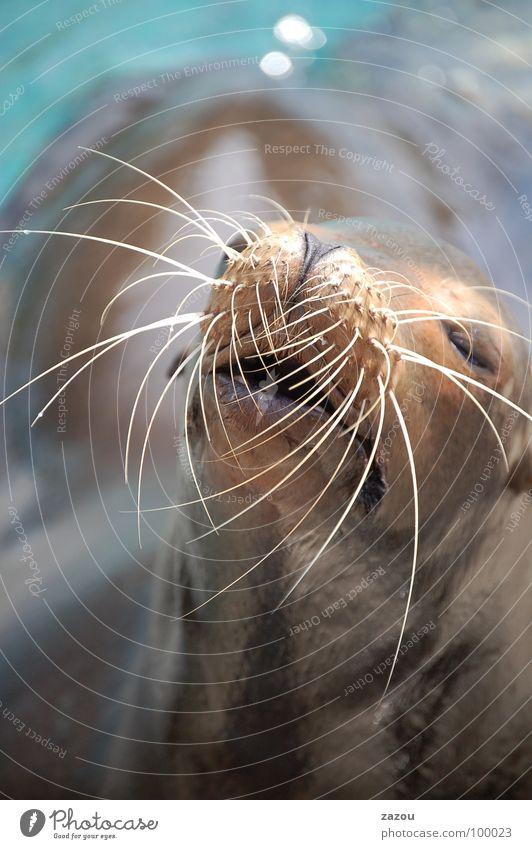 Sommerhitze Farbfoto Wohlgefühl Erholung Sonnenbad Meer Tier Wildtier 1 Pause Robben Seehund Seelöwe Florida Säugetier