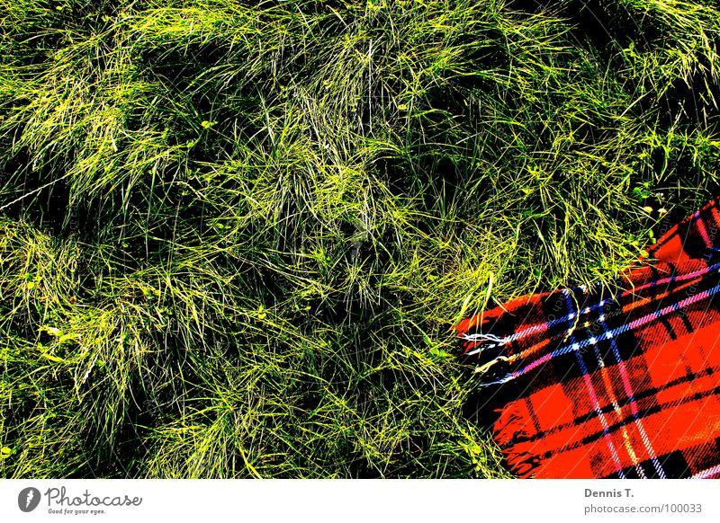 Ein Picknick im Grünen Ernährung Reichtum Freude Freizeit & Hobby Spielen Freiheit Sommer Wellen Tanzen Arbeit & Erwerbstätigkeit Wärme Gras Wiese Streifen