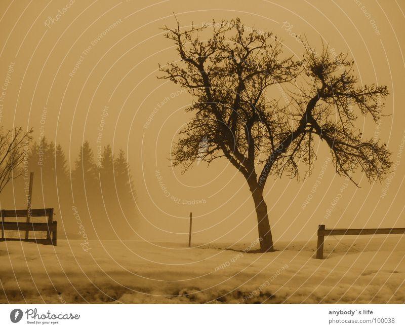 Gemeinsam Einsam Baum Winter ruhig Einsamkeit Wald kalt Denken Trauer Verzweiflung