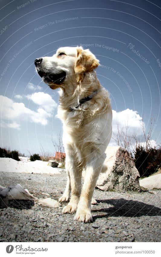 {Braun-weiße Rettung} Natur schön Freiheit Hund frei Fell Säugetier Tier Majestät