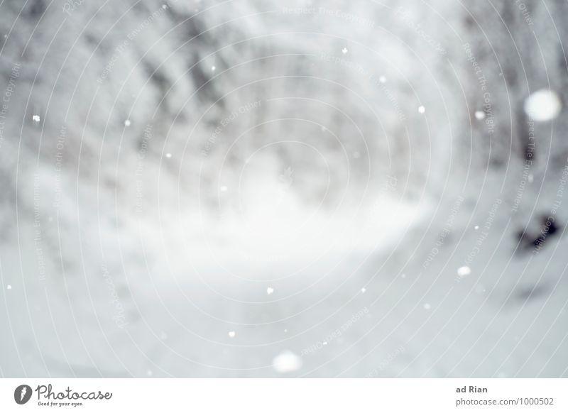 hypnotise Natur Landschaft Winter schlechtes Wetter Eis Frost Schnee Baum Park Wald Hügel Wege & Pfade wandern frieren frisch natürlich kalt Schneeflocke