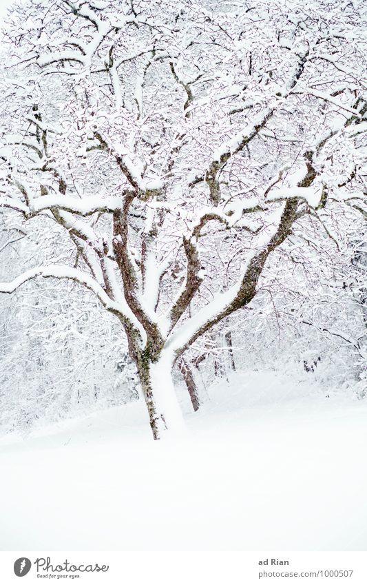 fresh breeze Umwelt Natur Pflanze Tier Winter Eis Frost Schnee Schneefall Baum Grünpflanze Park Feld Wald Hügel alt frieren ästhetisch kalt Schutz Idylle