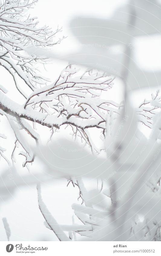 snowlines Umwelt Natur Pflanze Tier Winter Nebel Eis Frost Schnee Schneefall Baum Sträucher Grünpflanze Park Wald ästhetisch elegant ruhig stagnierend kalt
