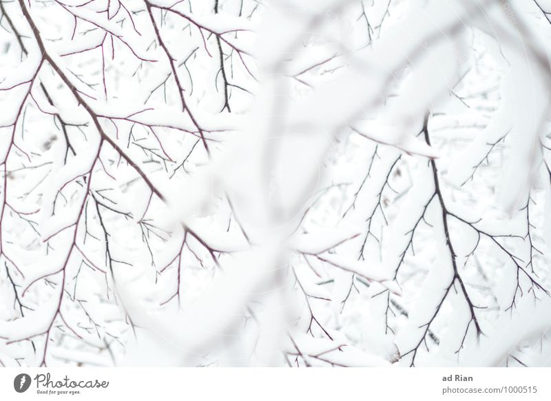 dancing with the white Umwelt Natur Tier Winter schlechtes Wetter Eis Frost Schnee Schneefall Pflanze Baum Grünpflanze Ast Park Wald ästhetisch Zufriedenheit