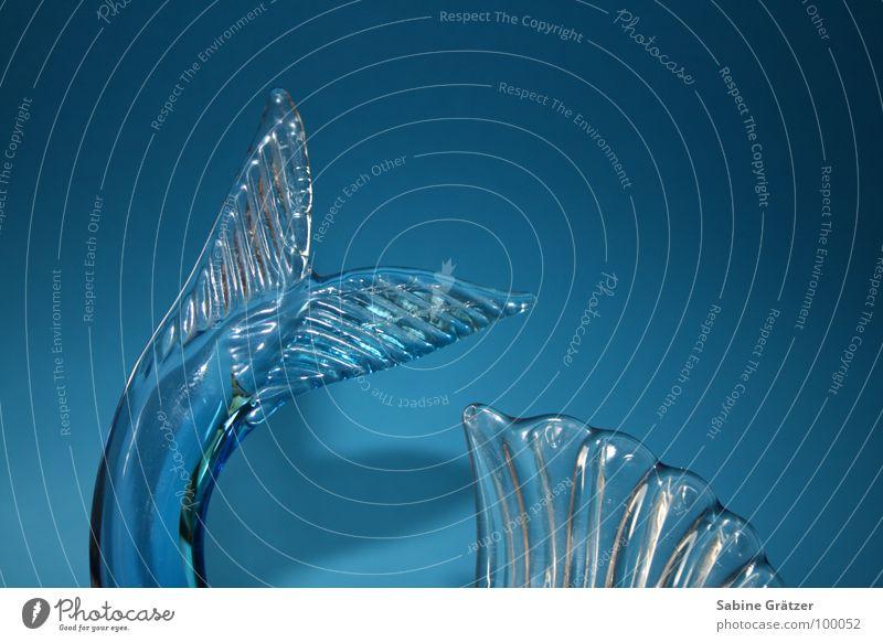 Fischig fischig Tier Meer Schwanz Schwanzflosse Dekoration & Verzierung Wasser Glas Glasfisch blau Zerrbrechlich Schwimmhilfe Scheune Schuppig