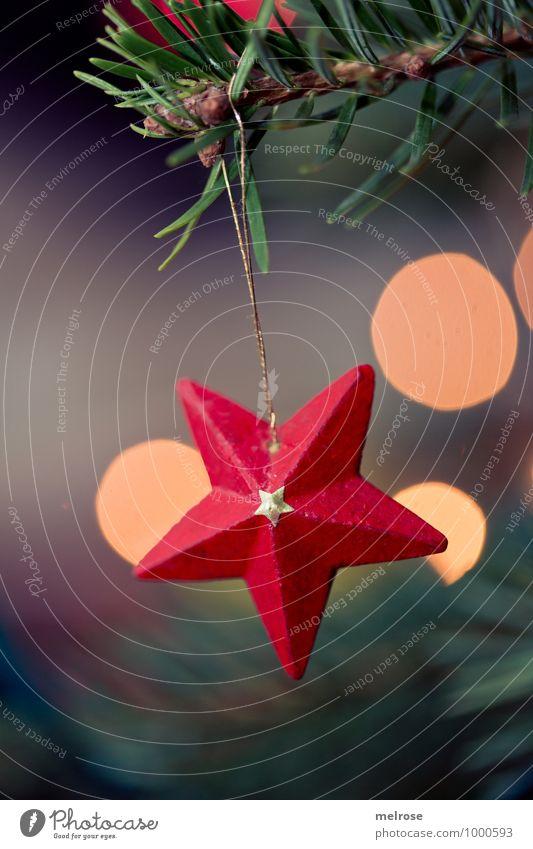 roter Stern Winter Stern (Symbol) Tannenzweig Christbaum Unschärfe Lichterscheinung glänzend Holzstern Feste & Feiern hängen leuchten elegant schön braun gold