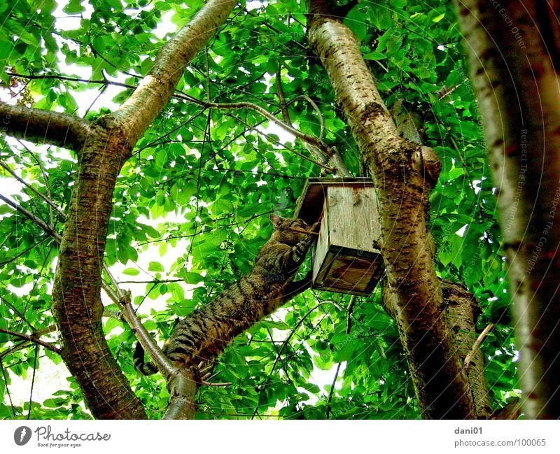 Besuch bei Nachbars ... Baum Katze Vogel Klettern Neugier Säugetier besuchen Futterhäuschen akrobatisch