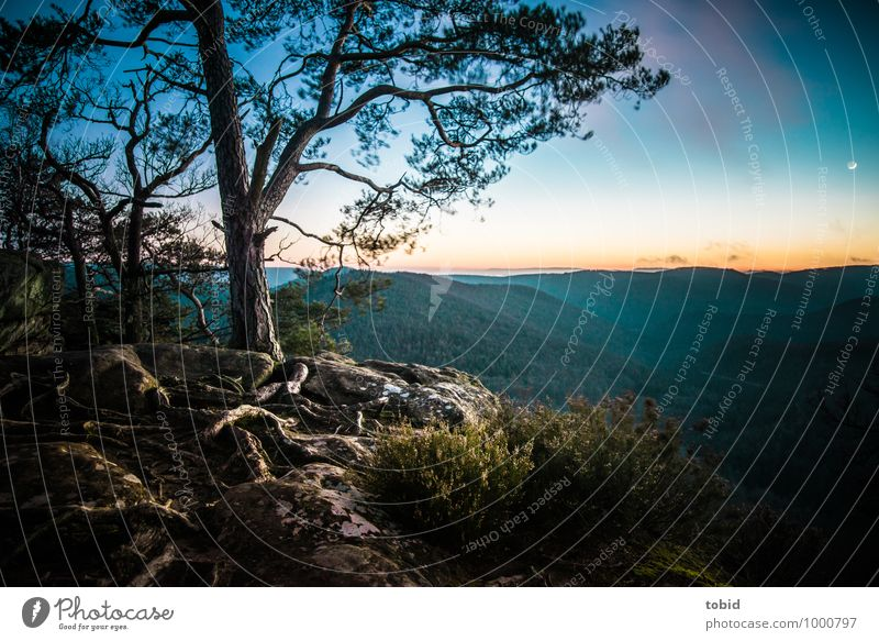 Schöne Nordvogesen Natur Landschaft Pflanze Himmel Wolkenloser Himmel Schönes Wetter Baum Gras Sträucher Moos Wurzel wurzelgeflecht Hügel Felsen