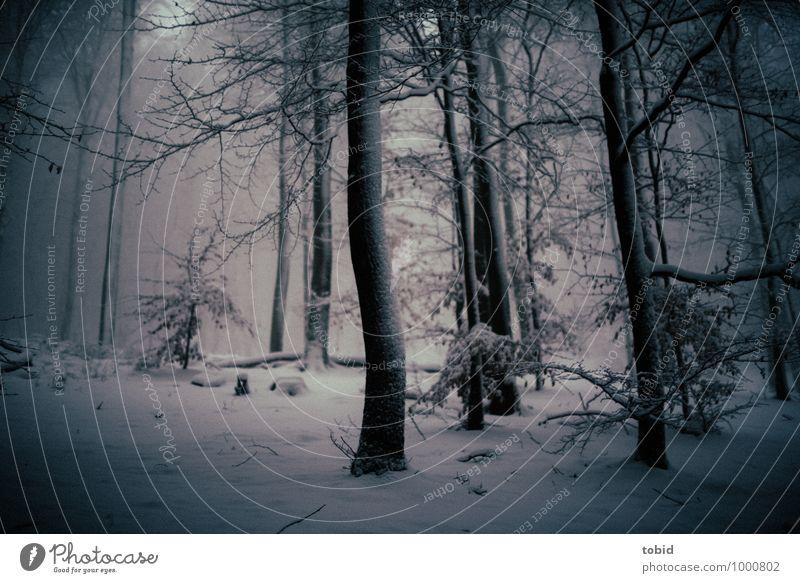 Mystisch Natur Landschaft Pflanze Winter schlechtes Wetter Unwetter Wind Eis Frost Schnee Baum Wald bedrohlich dunkel kalt blau grau schwarz Einsamkeit