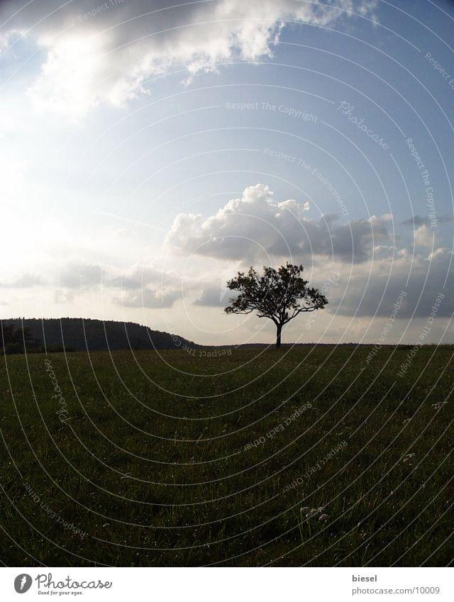 Baum auf dem Berggipfel Baum Berge u. Gebirge Landschaft