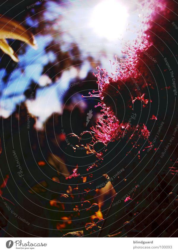 Dark Colors schön Pflanze Sonne Sommer Freude Leben Blüte Garten Park orange Regen rosa glänzend Wassertropfen Romantik geheimnisvoll