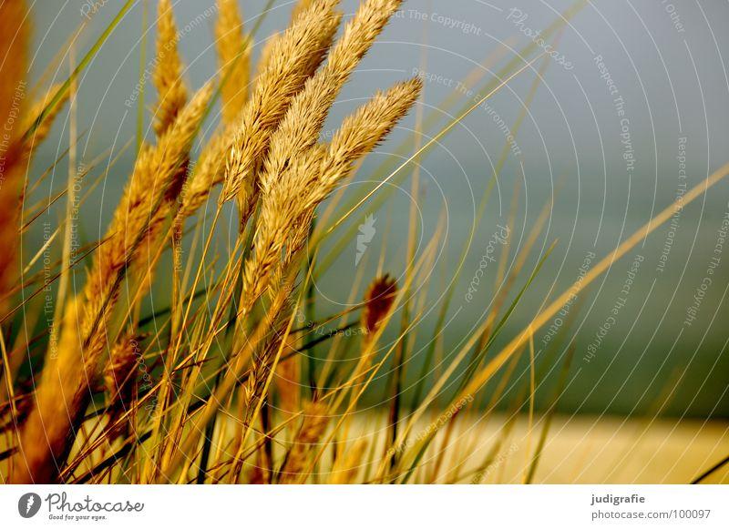 Küste Himmel Wasser grün schön Pflanze Sommer Strand Farbe Wiese Gras Sand glänzend weich zart Stranddüne
