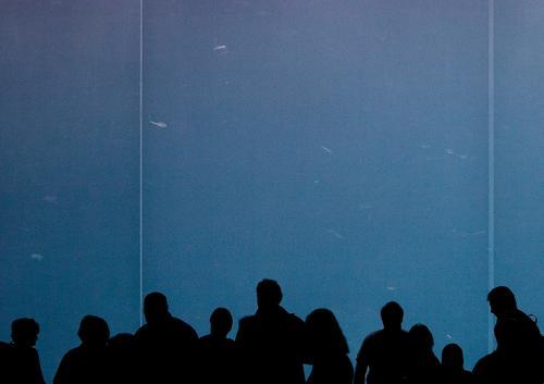 Fische gucken Aquarium Fenster Tier Zoo Mensch Publikum Blick dunkel Silhouette Menschenmenge Freiraum Platz beruhigend Erholung Menschengruppe Fensterscheibe