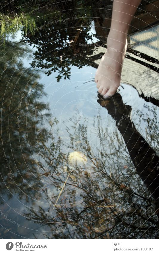 wasser in kleinen dosen Flüssigkeit liquide Erfrischung Kühlung kühlen Wasser See Leben ruhig Erholung Mensch Reflexion & Spiegelung nass Zehen Zehenspitze