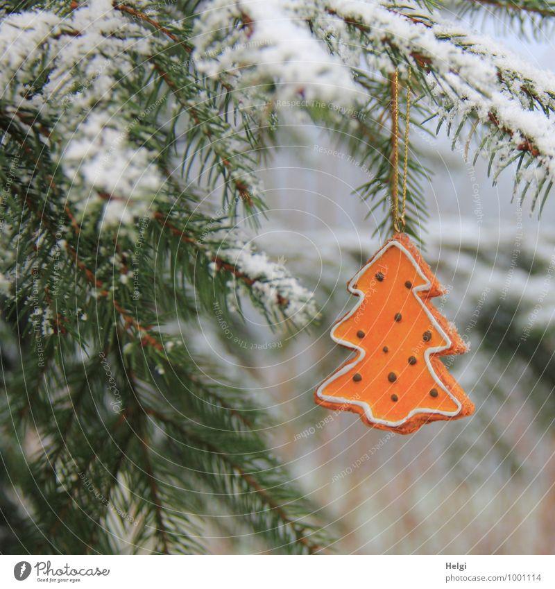 oh Tannenbaum... Natur Pflanze Weihnachten & Advent grün schön weiß Baum ruhig Winter Wald kalt Umwelt natürlich Schnee außergewöhnlich Stimmung