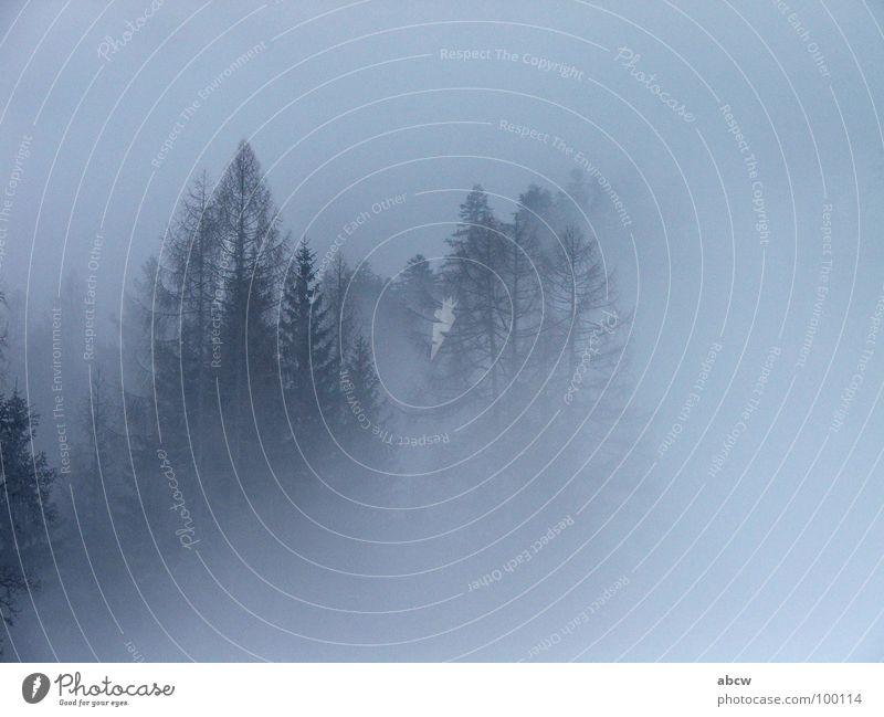 Nebel Baum Wald Traurigkeit Wetter Europa Tanne Österreich trüb
