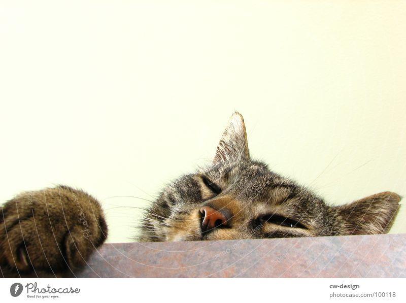 ROMEO... Tier Katze Nase süß Tiergesicht Fell Neugier Mut niedlich Appetit & Hunger Säugetier Pfote Haustier frech Schnauze Freisteller