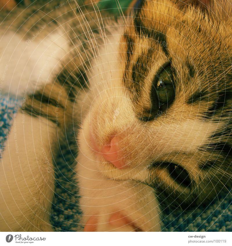 ...UND JULIA Katze Pfote Katzenpfote Fell niedlich Haustier Tier Landraubtier beobachten Schnurrhaar Säugetier Hauskatze Katzenauge Nase Stubsnase Tierporträt
