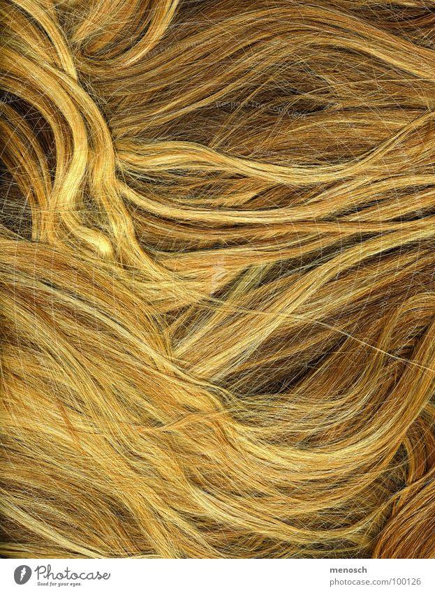 Haare Mensch schön gelb Haare & Frisuren Linie blond gold Friseur langhaarig Stroh Kamm Wellenlinie