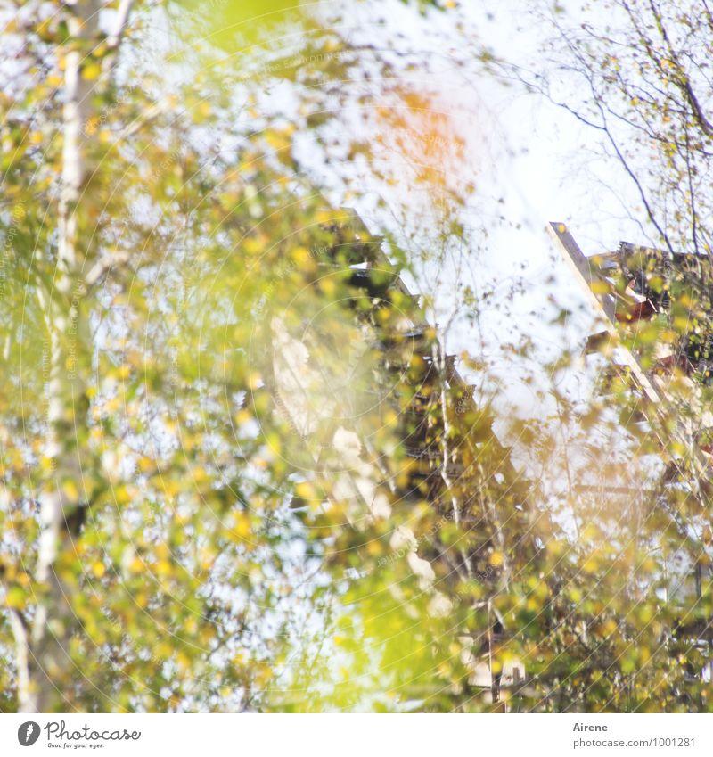 AST7 Pott | Herbstflimmern Bergbau Zeche Natur Pflanze Schönes Wetter Baum Birke Sehenswürdigkeit Zeche 'Zollverein' Fröhlichkeit frisch gelb gold grün träumen