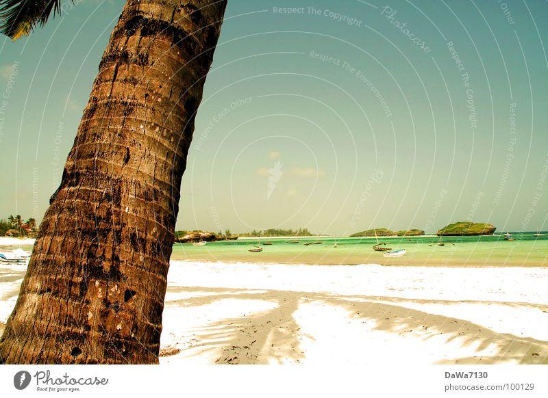 Palmschatten Strand Palme Kokosnuss Ferien & Urlaub & Reisen Erholung Kenia Afrika Küste Freude Sand Sonne