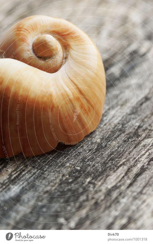 In Erinnerungen schwelgen ... Natur Ferien & Urlaub & Reisen weiß Meer Tier Ferne schwarz Stil grau Holz braun Lifestyle orange Design Dekoration & Verzierung