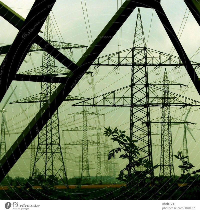 Strommast Invasion Himmel alt grün Baum schwarz Umwelt Wärme Holz Linie Metall Energiewirtschaft Wachstum hoch Elektrizität kaputt Technik & Technologie