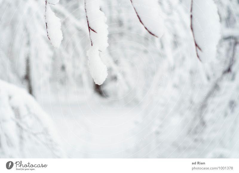 lifeline Natur Pflanze Baum Erholung Einsamkeit Landschaft Tier Winter Wald kalt Bewegung Schnee gehen Park Schneefall Eis