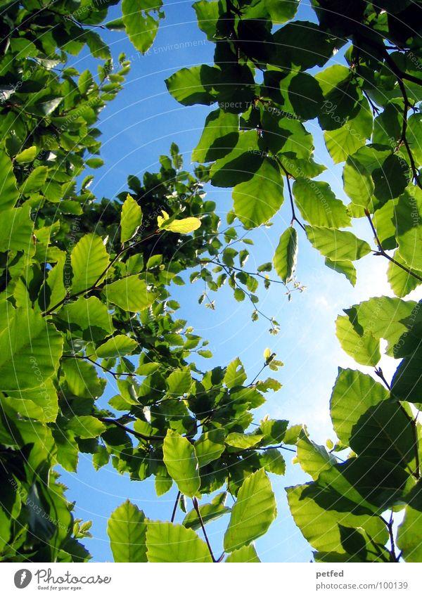 Im Garten Eden III Natur Himmel Baum grün blau Pflanze Sommer Blatt Holz braun Freizeit & Hobby Ast Gott Paradies Götter