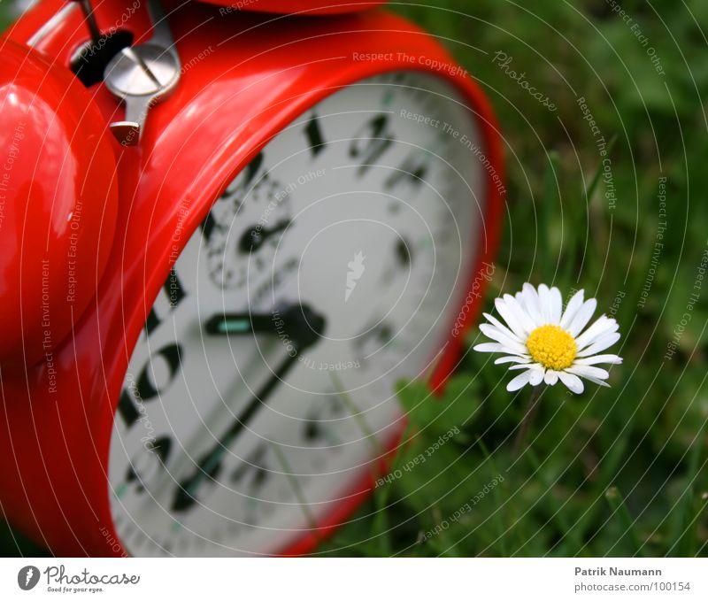 die Blüte der Zeit Wecker Uhr Gras rastlos rot grün Gänseblümchen Blume Pflanze Sommer Uhrenzeiger Ziffern & Zahlen Außenaufnahme