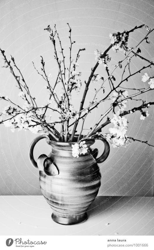 Blumenvase Natur Pflanze schön weiß Baum Einsamkeit ruhig schwarz Leben feminin Blüte natürlich Frühling Stimmung Wachstum