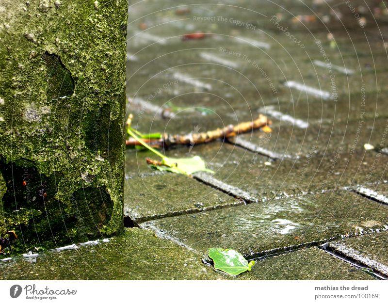 regenwetter Wasser grün kalt Wand Stein Regen Wassertropfen nass Bodenbelag verfaulen Ast Gewitter feucht Kopfsteinpflaster Unwetter Stock