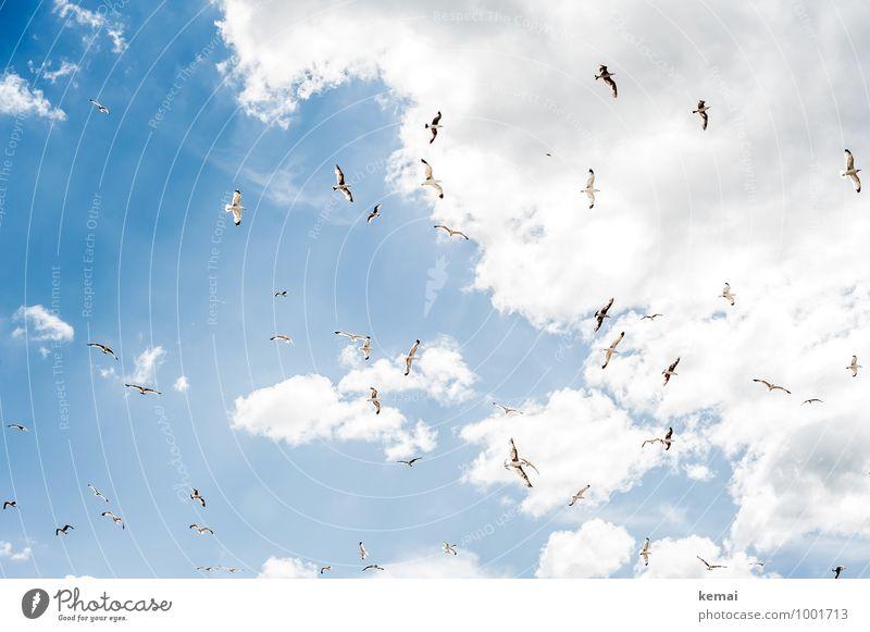 Alle Möwen fliegen hoch Natur Himmel Wolken Sonnenlicht Sommer Schönes Wetter Wärme Tier Wildtier Vogel Schwarm hell blau weiß Freude Glück Zusammensein