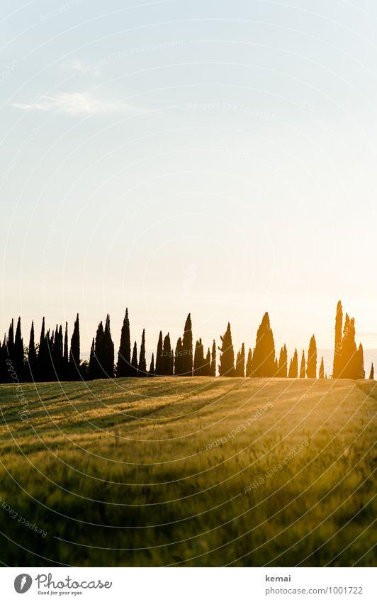 Zypressen Ferien & Urlaub & Reisen Tourismus Ausflug Sommerurlaub Italien Chianti Toskana Umwelt Natur Landschaft Pflanze Himmel Sonne Sonnenaufgang