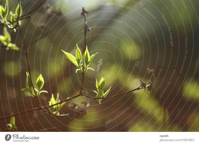 warmes Frühlingsgrün Natur Pflanze Sommer Baum Blatt ruhig Freude Wärme Leben Glück Zeit Stimmung hell Wachstum