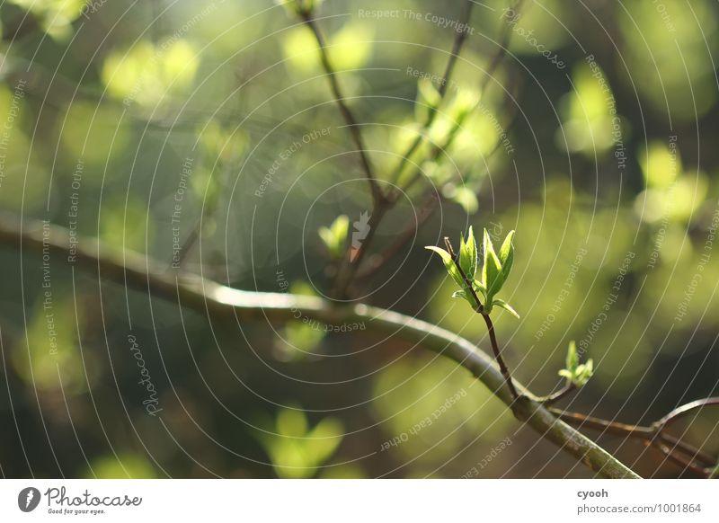 grün. Natur Pflanze grün Baum Blatt Freude Wärme Leben Frühling Glück Zeit hell Wachstum Kraft Zufriedenheit frisch