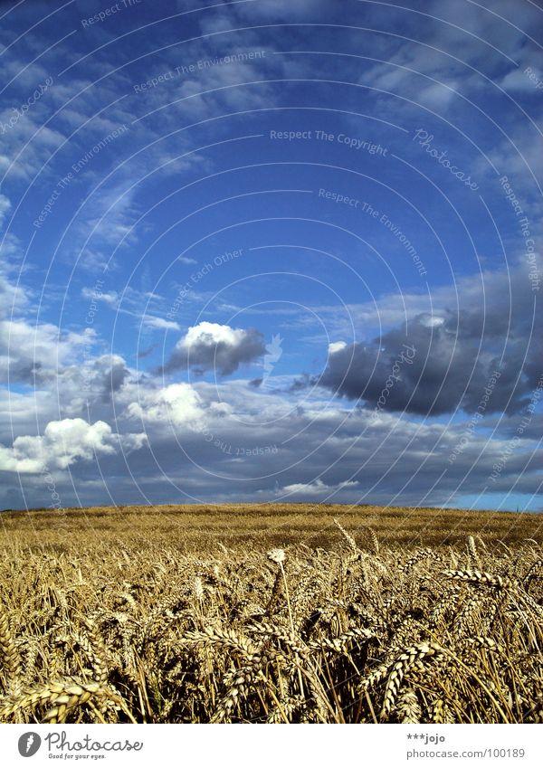 ron sommer Himmel Natur blau weiß Sommer Wolken gelb Erholung springen Arbeit & Erwerbstätigkeit Feld gold Spaziergang Länder Landwirtschaft Getreide