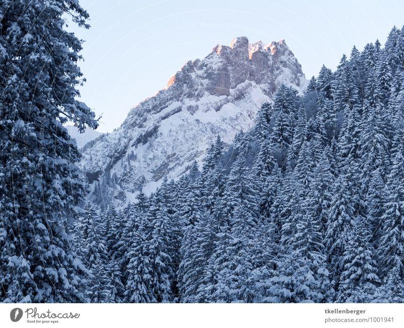 Alpstein im Morgengrauen Plattenbödeli Schneeschuhe Schneefall Baum Wald Berge u. Gebirge Schneebedeckte Gipfel Buchstaben Winter Winterlicht kalt Schweiz Alpen