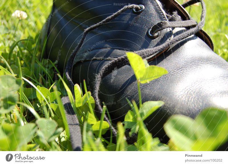 wunderschuh Freude Gras Freiheit Vogel glänzend Zufriedenheit Luftverkehr Erfolg Schuhe Geschwindigkeit gefährlich Schönes Wetter Seil Schnur Suche dünn