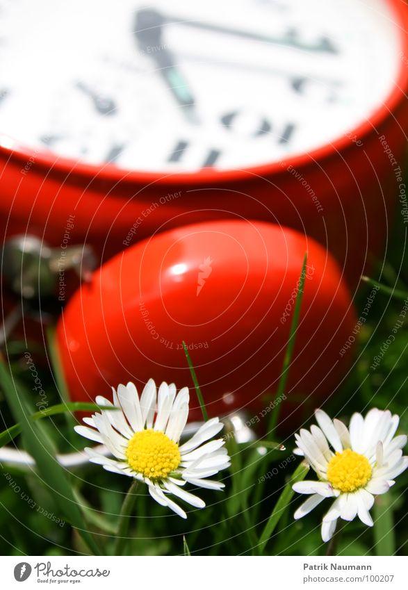 es war einmal vor langer Zeit... Gänseblümchen Wecker rot grün Wiese Gras Ziffern & Zahlen Unschärfe 2 Uhr technisch Mechanik verkümmert Detailaufnahme