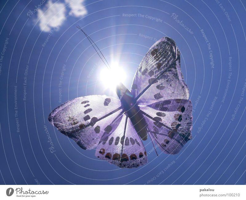 butterfly in the sun Himmel Sonne blau Sommer Wolken Farbe fliegen frei violett Dekoration & Verzierung Flügel Insekt Punkt Schmetterling Fühler