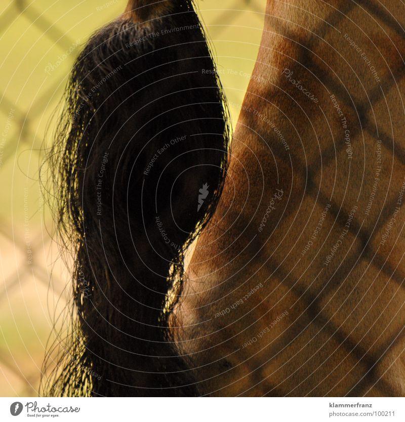 Ey was gugst DU mir... Blick Schwanz Haare & Frisuren Zopf Gitter Haftstrafe Tier Zoo grün gelb braun schwarz groß lang Tiergarten Safari Wien