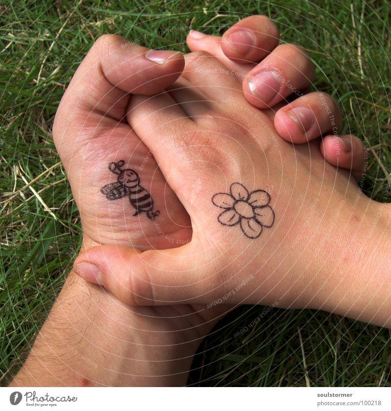 Bienchen und Blümchen pt3 Hand Blume Liebe Wiese Gefühle Gras Blüte Frühling Zufriedenheit gehen Finger Rasen berühren Weide Zeichen Biene