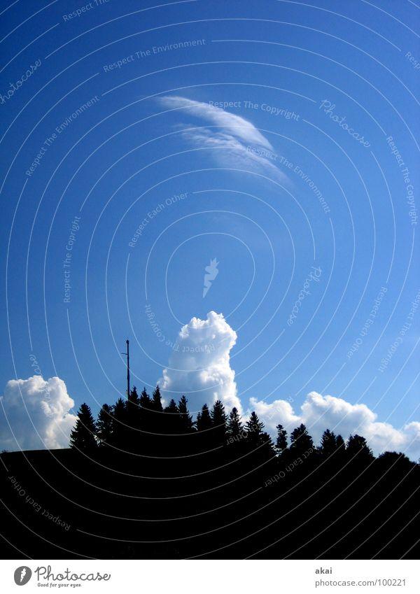 Wetterphänomen Sturm Baum Sonnenlicht himmelblau Schwarzwald Baumstamm Orkan Reflexion & Spiegelung Schauinsland Kumulus Wolken Berge u. Gebirge Himmel storm