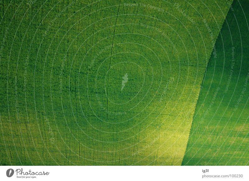 die farbe des sommers Natur grün Sommer Freude gelb Farbe Wiese springen Spielen Frühling Freiheit Linie Zufriedenheit Kraft Feld glänzend