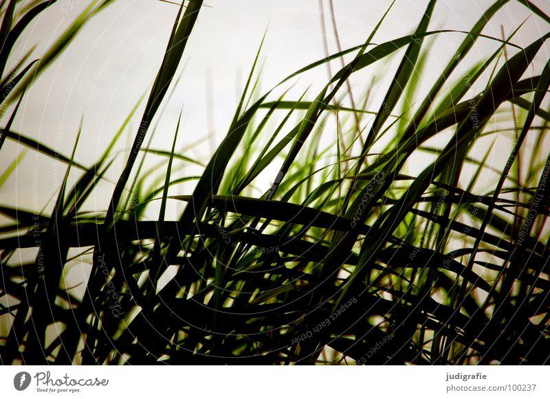 Gras Strand Gegenlicht See Meer Abendsonne Licht grün Stengel Halm Wildnis Umwelt Pflanze Farbe Küste Sand Wind Natur Linie Strukturen & Formen büschel Spitze