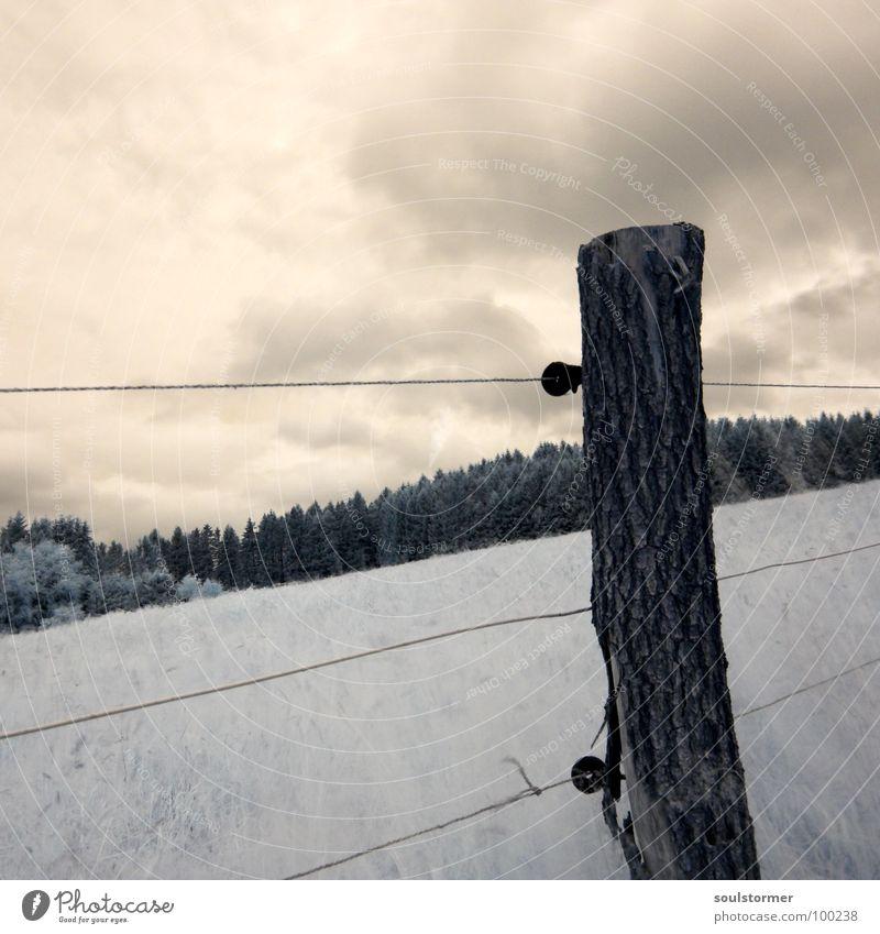 The new world... Himmel weiß rot schwarz Wolken Wiese Gras träumen Wege & Pfade Denken lustig Spaziergang außergewöhnlich obskur Zaun