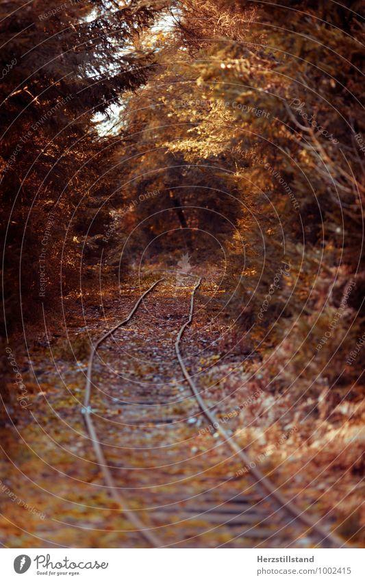 autumn Ausflug Ferne Freiheit wandern Natur Landschaft Erde Herbst Schönes Wetter Wald Farbfoto Außenaufnahme Menschenleer Schwache Tiefenschärfe